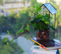Hanging Glass House Containers Planter Flowerpot Garden Greenhouse Terrariums for Plants/Succulents/Flowers