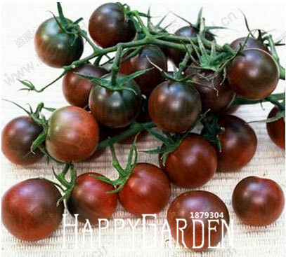 Promotion!Tomato Bonsai Organic Chocolate Tomato Plant, Purple Pearl Tomatoes Garden, Potted Fruit And Vegetables - 20 Pcs/lot,