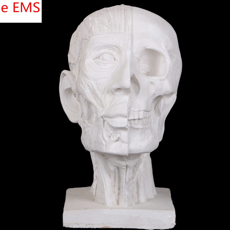 Gypsum Dissection Muscle Skull Bust Statue Gypsum Powder Craftwork Home Decorations Art Material L2330