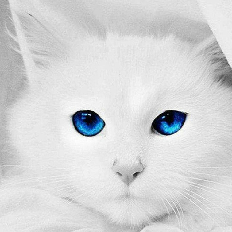 списке картинки аватарки белый кот древнего