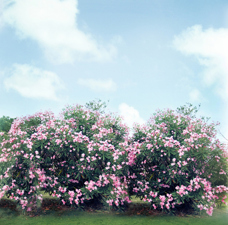 8x8ft spring clouds sky white pink flowers bush spring wedding 8x8ft spring clouds sky white pink flowers bush spring wedding custom photography studio background backdrop vinyl 10x10 8x10 in background from consumer mightylinksfo