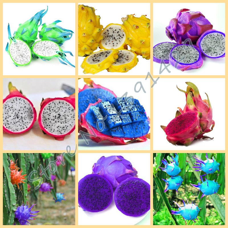 ⑥50pcs Bag Rare ᗐ 9 9 Kinds Of Pitaya Seeds Very 웃 유