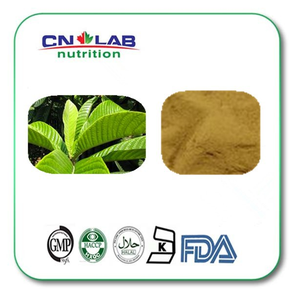 200g Factory Supply Loquat Leaf Extract Ursolic Acid Powder 100% natural argy wormwood leaf extract powder 200g
