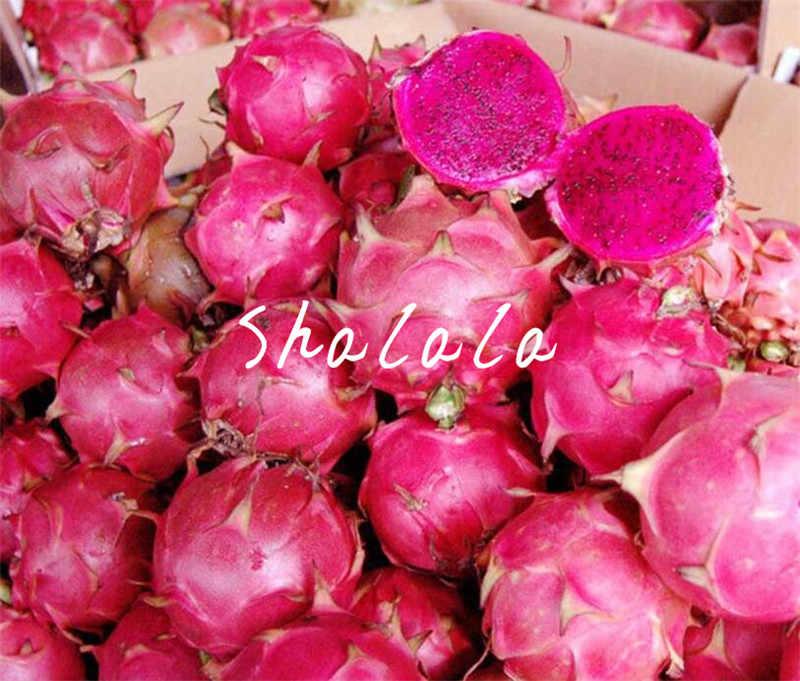 Большая промакция! 500 шт./пакет красный дракон фрукты кактус не ГМО красочные Крытый Бонсай питая фруктовый сад маленькие растения Бонсаи