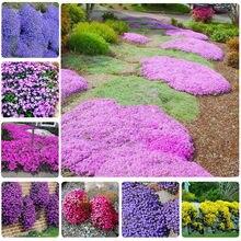 100 Pcs Creeping Thyme Bonsai Rare Color  Plant Perennial Ground Cover Flower Foliage for Home Garden Decor B021