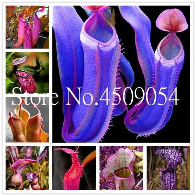 Il trasporto Libero 100 pz Nepenthes bonsai Balcone Semi di Dionaea Muscipula Bo