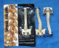 Vertebral joint Keyring Spine model accessories free shipping