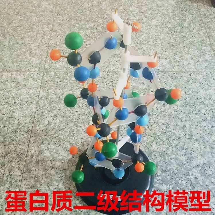 Modello di struttura secondaria di proteine Biologico insegnamento modello di attrezzature sperimentali
