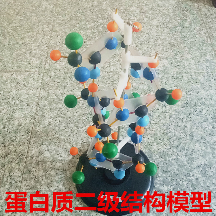 Secondary structure model of protein Biological teaching model experimental equipment