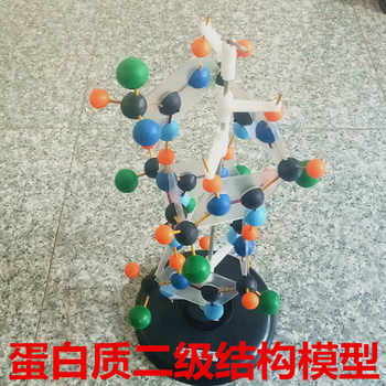 Secondary structure model of protein Biological teaching model experimental equipment - DISCOUNT ITEM  12% OFF All Category