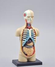 32 шт 4d модель тела человека анатомическая Анатомия органов
