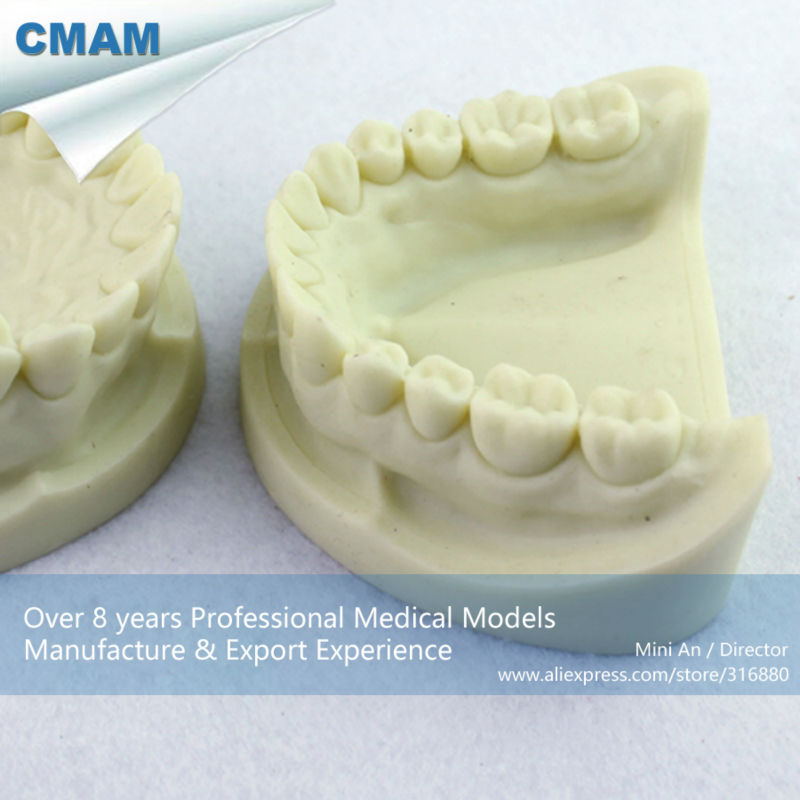 CMAM-DENTAL05 Cavity Preparation Jaw Model for Dental Student Training cmam dental16 child dental education 3 6 age graghically developing model