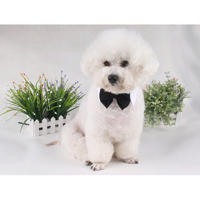 Popular Bow Tie Bow Adorable Dog - 2016-New-Small-Adjustable-Dog-Bow-Tie-Neck-Tie-Cute-Pet-White-Black-Cotton-British-Style  Perfect Image Reference_805242  .jpg