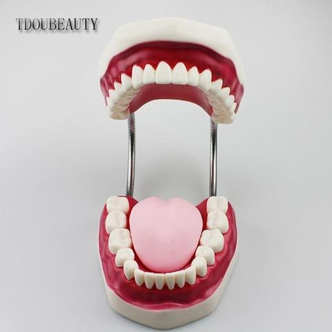 dente modelo ensino dental apresentacao