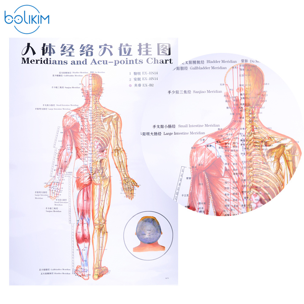 Bolikim 6pcs English Handfootearbody Meridian Points Of Human