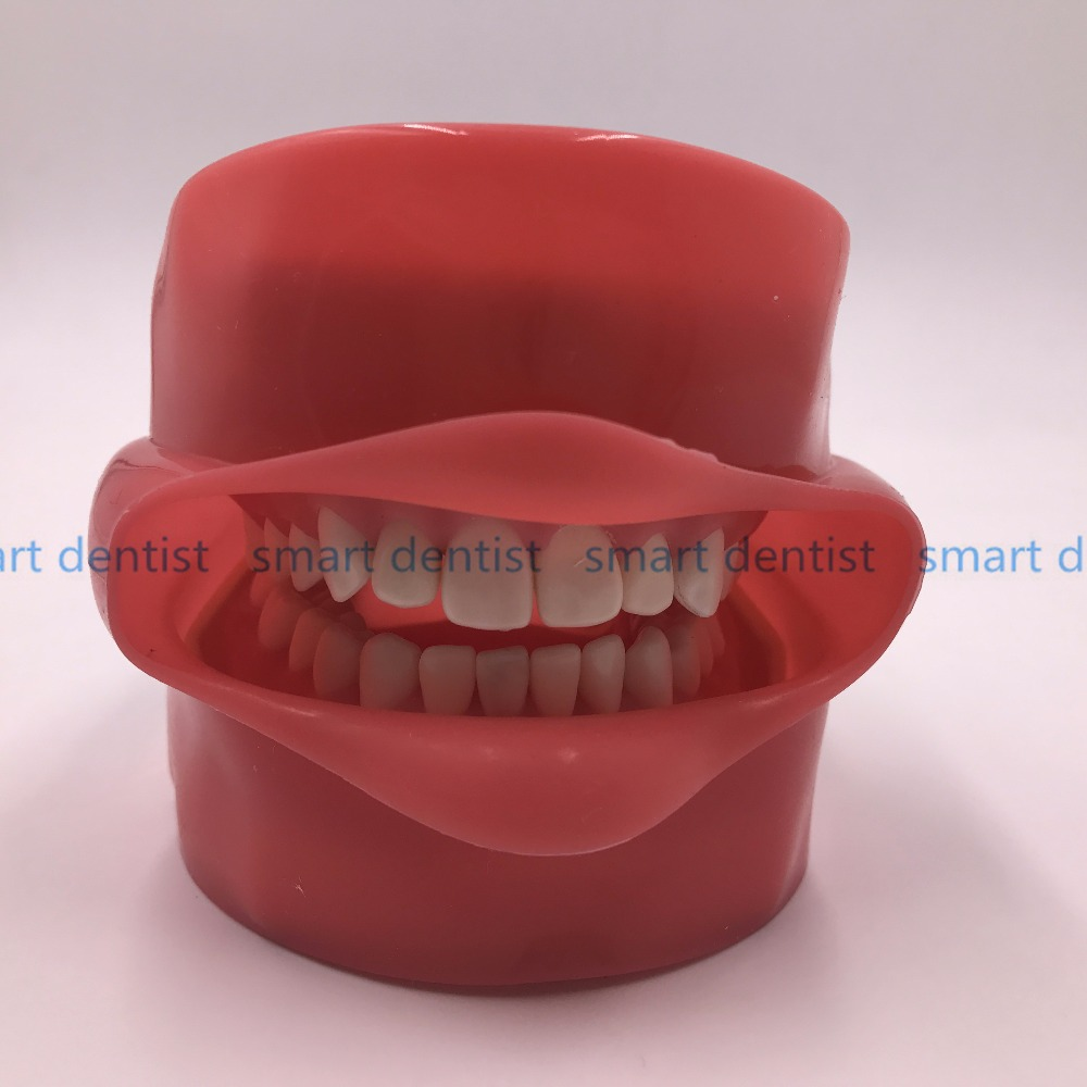 Good Quality Oral Simulation Practice System Dental Phantom Head for Dental School - 5