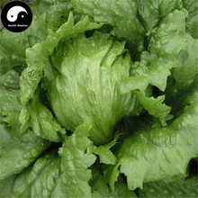 Buy Leaf Lactuca Vegetable Seeds 1200pcs Plant Green Salad Vegetables Lettuce