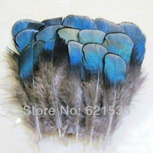 Freeshipping!200Pcs/Lot 4-8cm Lady Amherst Iridescent Blue Pheasant Plumage Feathers Crafts Jewelry Fly Tying