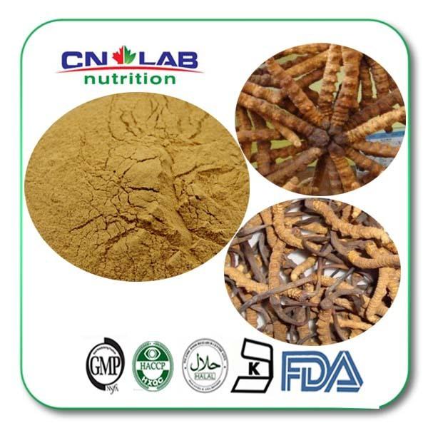 O Envio gratuito de Alta potência 1 KG Cordyceps sinensis extrato Em Pó/chinês lagarta fungo extrato Em Pó/extrato de cordyceps