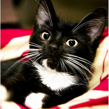 Animal hembra gato negro nueva llegada de DIY cristal completo taladro cuadrado 5D pintura diamante Cruz puntada kit mosaico ronda rhinestone