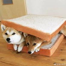 Amazing Pet Bed Mat Product For Dog And Cat