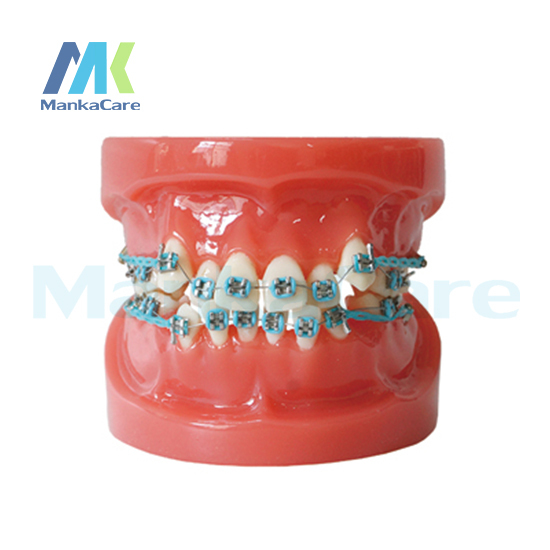 Manka Care -24pcs Tooth , Orthodontic Model Oral Model Teeth Tooth Model