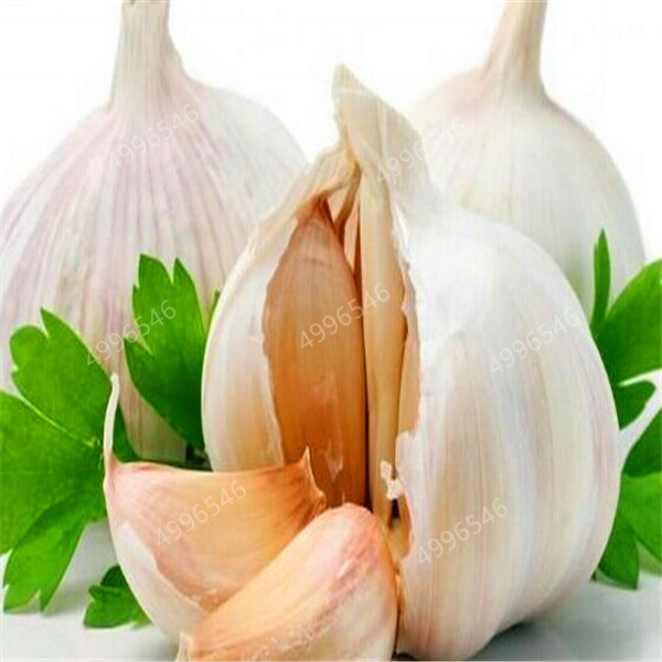 200-Pcs-Multi-petals-Garlic-Bonsai-Organic-Bonsai-Red-Healthy-Green-Vegetable-Bonsai-For-Kitchen-Seasoning (1)