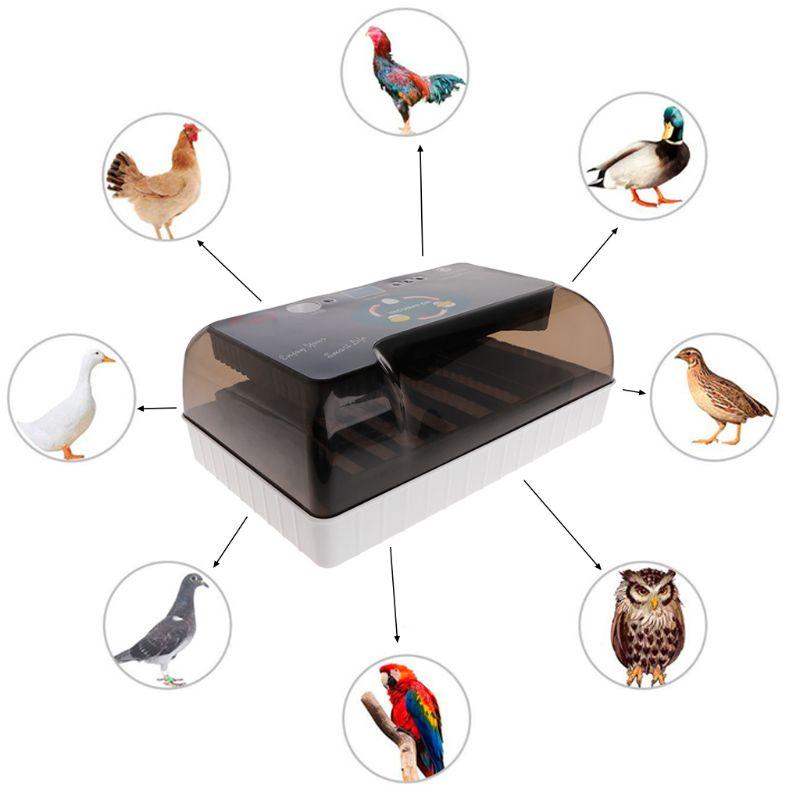 Incubadora de ovos de Fazenda Máquina Dispositivo de Incubação Nascedouro Mini 220 V Universal LED Profissional Suprimentos Da Agricultura DA UE Para Frango Pato