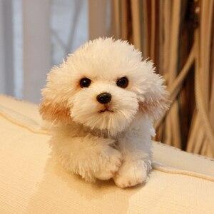 Śliczne miękkie zwierzę maltański pluszowy pies zabawki jakości nadziewane leżące zwierzęta psy domowe lalki prezent dla dziecka 35x12x14cm