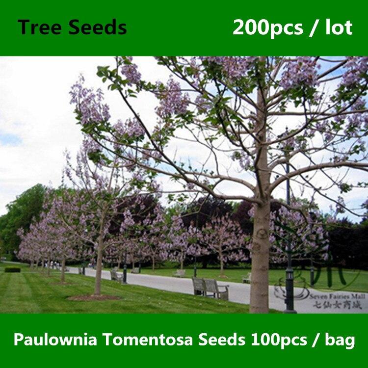 familia paulownia tomentosa semillas unids emperatriz de plantas semillas de rboles