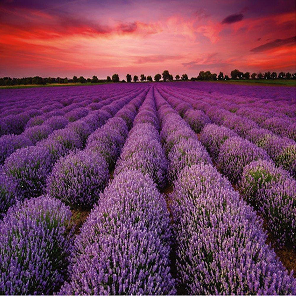 1000Pieces Jedinstvena Francuska Provansa Lavender Field slagalica - Igre i zagonetke