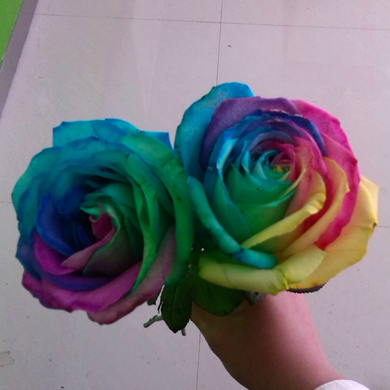 rainbow rose seeds beautiful flower seeds home garden