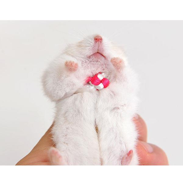 Kolar Haiwan Peliharaan Baru Collar Leash Adjustable Guinea Pig Small - Produk haiwan peliharaan - Foto 5