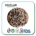 Бесплатная Доставка Высокое Качество 300 gram Grifola Frondosa (Майтаке) Выписка 30% Полисахарида повышение иммунной системы