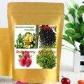 Top4 Cetona de Frambuesa, Garcinia Cambogia, verde del Grano de Café y Té y Complejo de Acai Berry pérdida de Peso Cápsula 450 mg x 300 unids