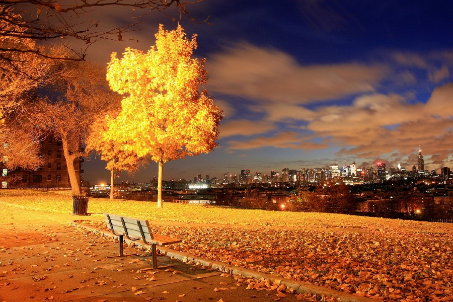 Diy Frame Skyline Cityscape Nature Garden Park Bench Trees Night