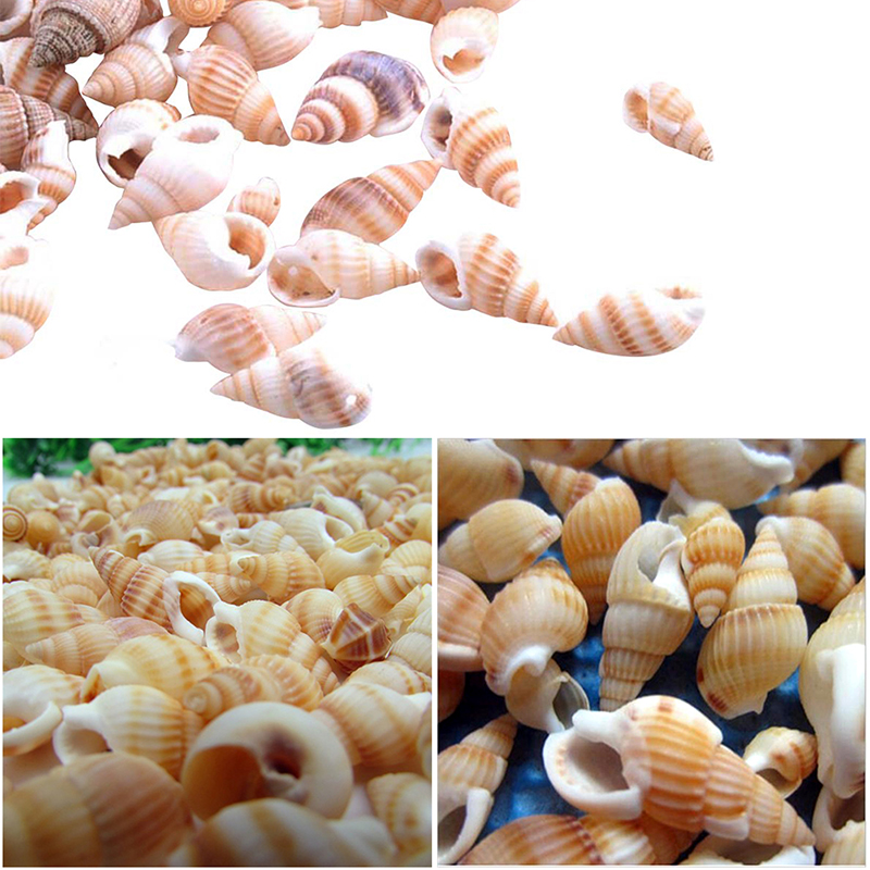 100PCS Natural Conch Shells Aquarium Decoration Home Decor