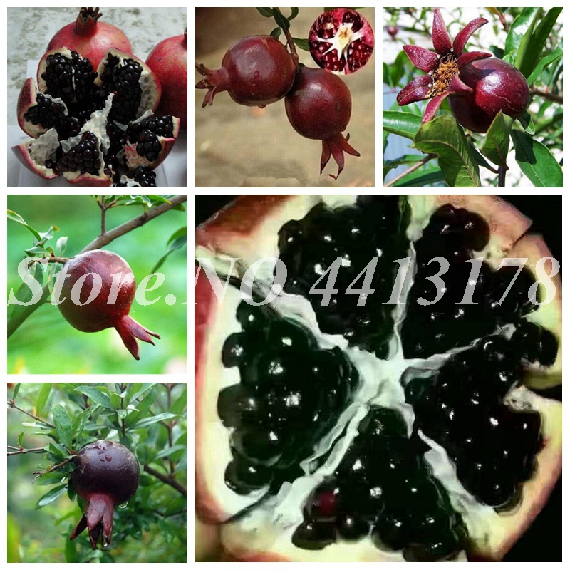 Imported Perennial Fruit Tree Rare Black Pomegranate Fruta 20 Pcs Fruits Red Flower Plant Very Delicious For Home Garden Decor