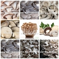 100 Seeds/bag Mixed Edible Mushrooms, Pleurotus Mushroom Strains Geesteranus Seed Plants Delicous Organic Vegetable Seeds