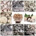 100 Semillas/bolso Mezclado Hongos Comestibles, Hongo Pleurotus Cepas Geesteranus Deliciosas Semillas De Plantas Semillas de Hortalizas Orgánicas