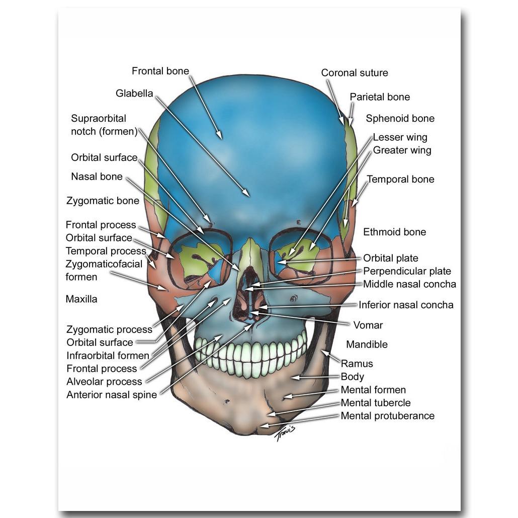 Menschlichen Anatomie Schädel und Knochen Art Silk Tuch Plakat druck ...