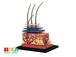 Кожа и волосы 4d мастер головоломка Сборка игрушки человеческого тела орган анатомическая модель для медиков обучающая модель