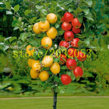 лучшая цена 100 apple tree seeds Dwarf bonsai apple tree MINI fruit seeds for home garden planting