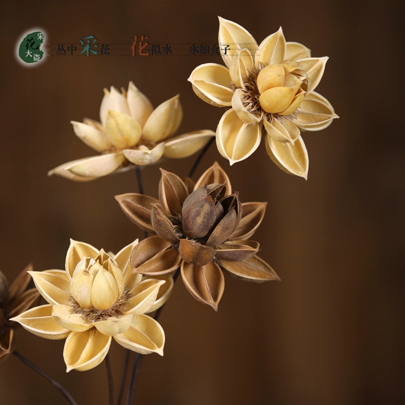 1PCS Hibiscus Dry Lotus Yunnan Dried Flowers Simulation Flower Arrangement  Simulation Flower Ground Is Decorated( Part 80