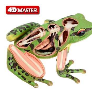 4D Master frog specimen anatomy model visceral skeleton assembly model 4d master stem anatomy model gummi bear skeleton anime figure adults kids gifts science animal model