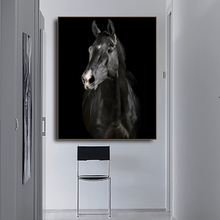 Horse Photography Animals Print on Canvas Home Decoration Wall Art Oil Painting Pictures Postesrs for Living Room Bedroom