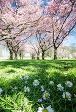 Laeacco Spring Flowers Grassland Bokeh Trees Scenic Photography Backgrounds Customized Photographic Backdrops For Photo Studio