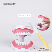 Adult Dental Teeth Model And Toothbrush With Removable Lower Teeth Teaching Model