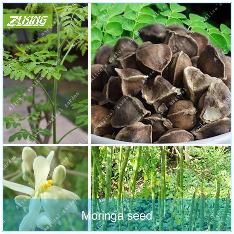 ZLKING 5pcs Moringa Seed Edible Food Tree Seeds Bonsai Plant For Home Garden Bonsai Tree Plant In Pot tropical ornamental plants