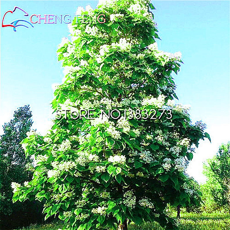 Online get cheap hardy flowering plants for Hardy flowering trees